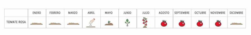 Calendario cultivo tomate