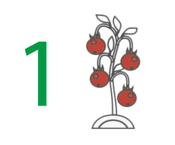 tomatera-basia-movil-6x5